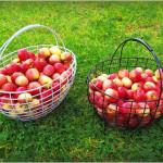 Korv õuntega